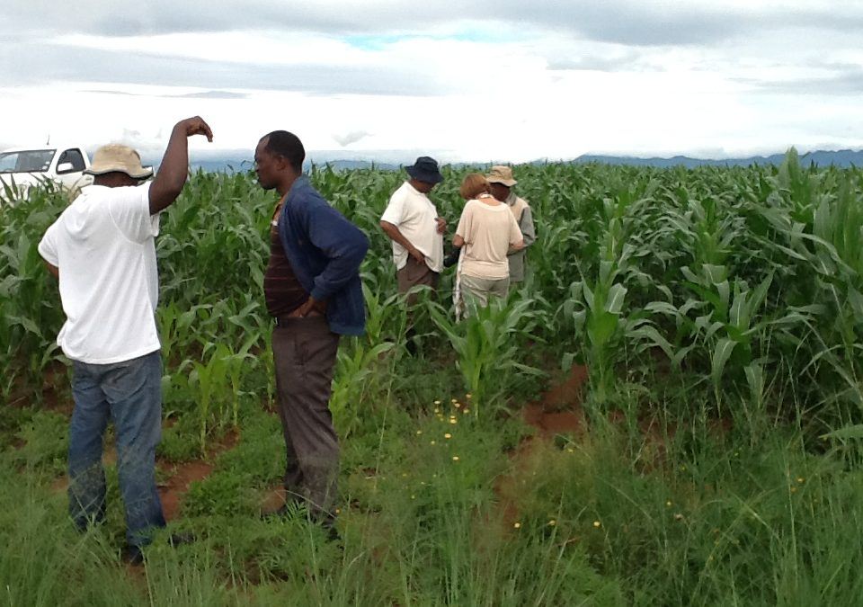 SA to host agri-extension week conference in October