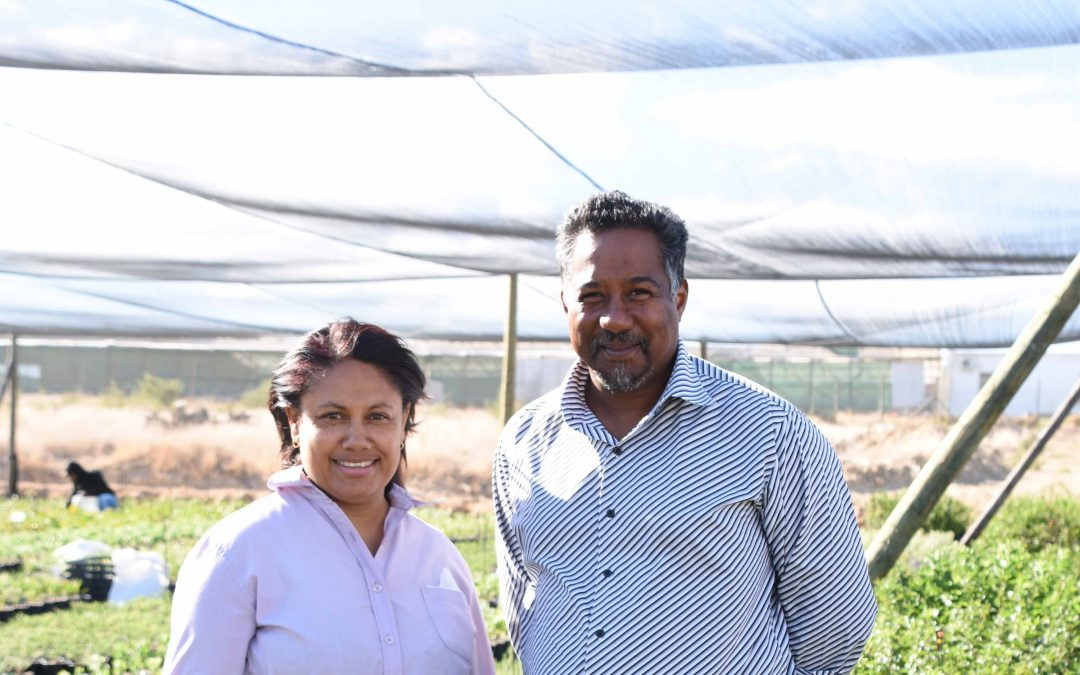 HORTGRO takes smallholder farmers up the commercial ladder